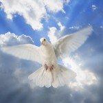 Emmanuel Adebayor over Jezus – 13 redenen waarom ik moslim ben geworden